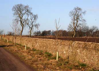 Photograph of a drystane dyke