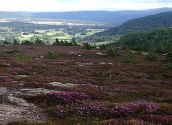 Hills near Braemar. Photo Credit: Kerry Waylen.