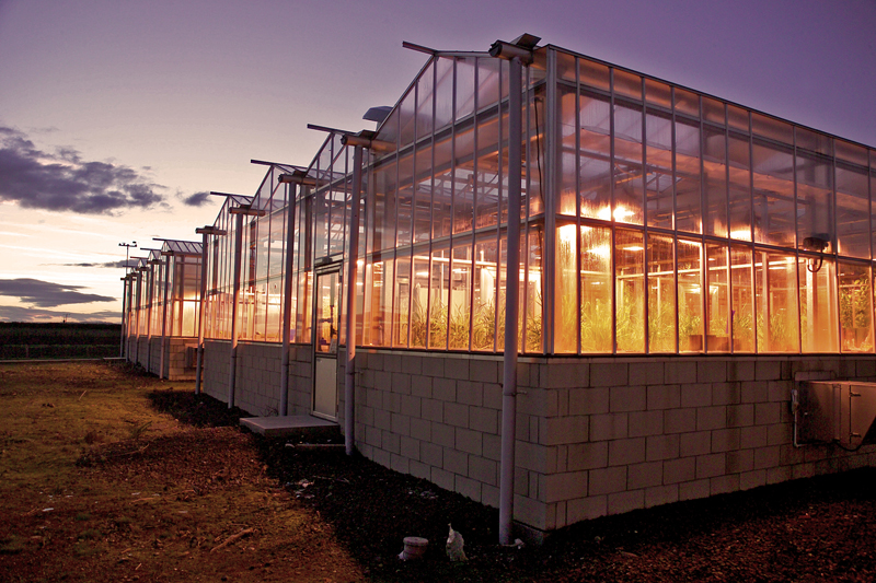 Photograph of Glasshouses on the Dundee site