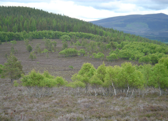 Image showing birch woodland establishing on moorland