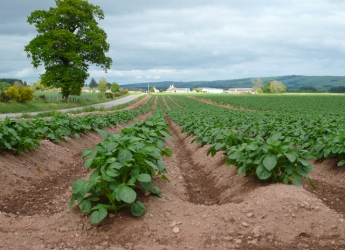 Photograph of highly productive Class 2 land in the Howe of the Mearns