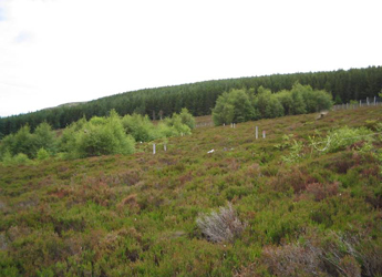 Image showing MILES planted birch plots