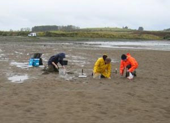 Photograph of scientists collecting samples on East coast beach