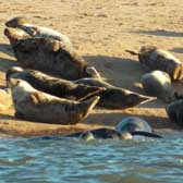 Seals are one source of faecal pathogens in the Ythan Estuary