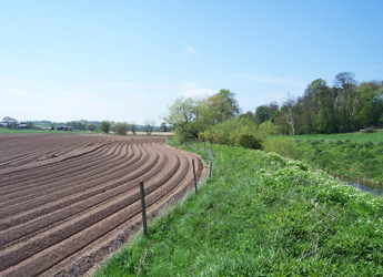 Photo by Andy Vinten and shows a buffer strip in a field in Aberdeenshire