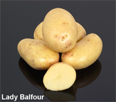 Photograph of Lady Balfour potatoes
