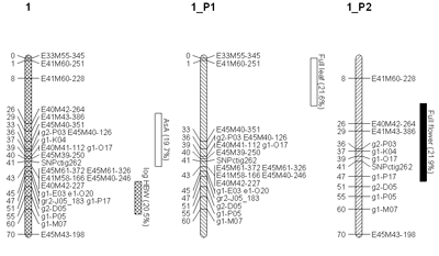 Figure 1: Linkage Group 1 from Ribes nigrum map, with parental types shown separately.