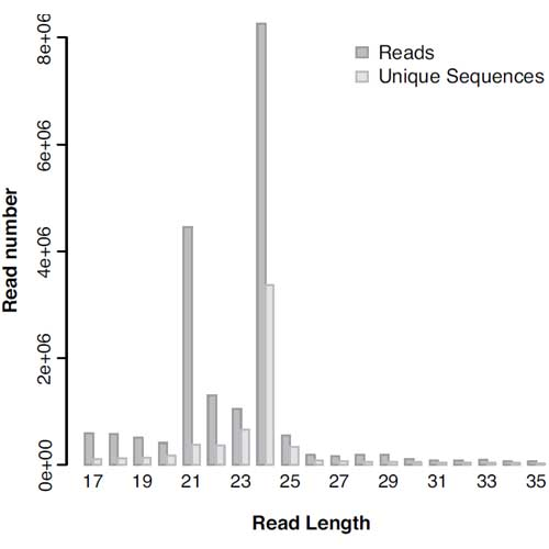 Figure 3: Small RNA read distribution in potato