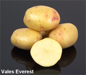 Photograph of Vales Everest potatoes