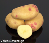 Photograph of Vales Sovereign potatoes