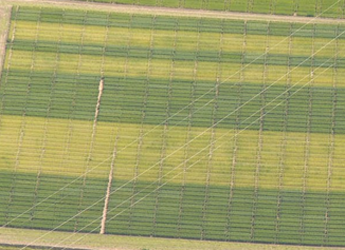 Photo of Greengrain; lighter strips have no applied fertiliser and dark have