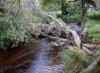 A naturally formed and monitored log jam on the Logie Burn in Aberdeenshire duri