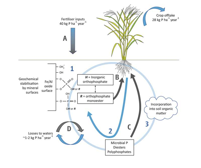 crop growth analysis in relation to environment pdf