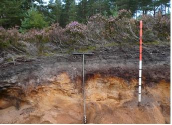 Photograph of a soil profile of heather moorland