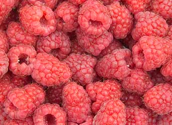 Photograph of raspberries