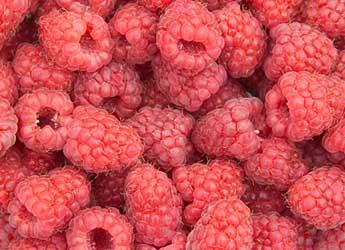 Photograph of raspberries