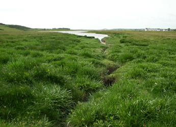 Photograph of a salt marsh