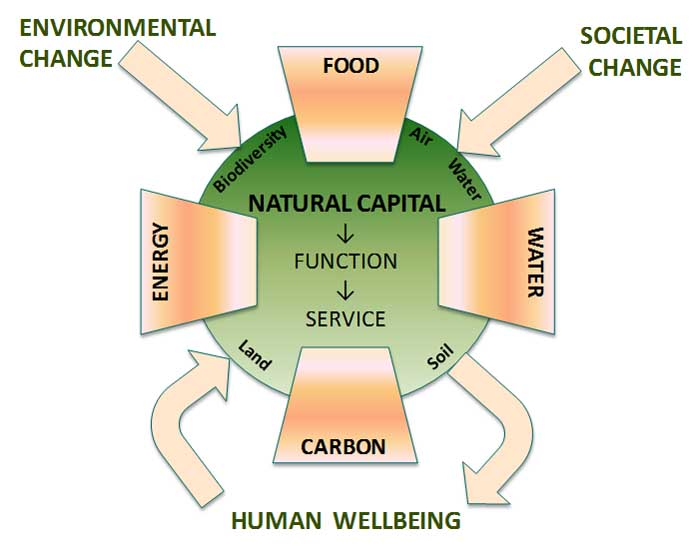 natural capital essay Natural capital provides goods and critical 'ecosystem services' essential for a functioning economy, businesses and society these include fresh water.