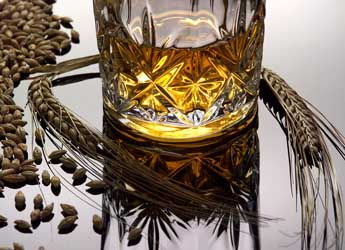 Photograph of a glass of whisky and ears of barley
