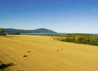 Photograph of harvested field