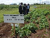 Potato field trial at Bvumbwe Research Station