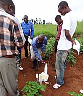Field training in testing for bacterial wilt in Malawi