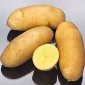 Mayan Gold potatoes