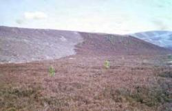 Heather burning, on Dava Moor,  North of Grantown-on-Spey