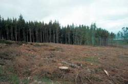Recently felled woodland, Teindland, Morayshire