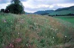 Herb-rich grassland within site, Central Perthshire