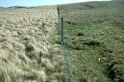 Nardus dominated grassland, semi-natural on left, grazed right of fence