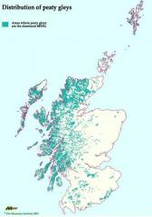 Distribution of peaty gleys