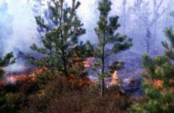 Heather burning, in this case incorporating regenerating trees