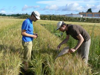 Harvesting experimental mixtures plots at the James Hutton Institute's Dundee site.