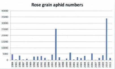 Image of a graph showing Rose grain aphid Numbers (1984 - 2011)