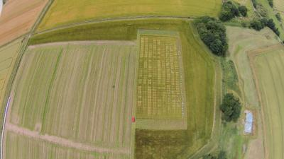 Aerial view of a crop mixture trial investigating the interaction between barley crop diversity and weed performance.