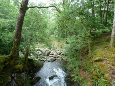 One of our study sites in Glen Creran: What do non-experts think about this forest, and does information on Atlantic rain forests and lichen communities influence their views?