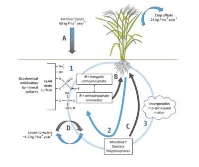 Figure 1: Nutrient cycle