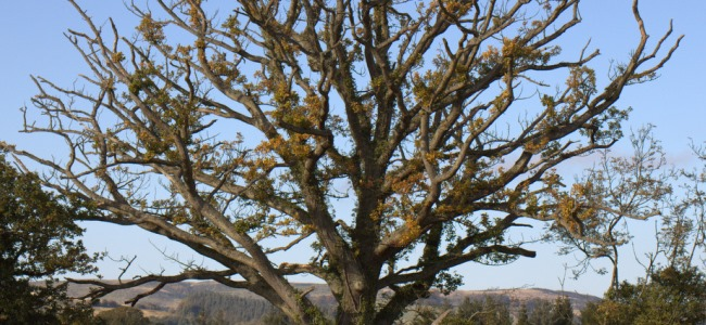 £2m pledged to safeguard Britain's trees