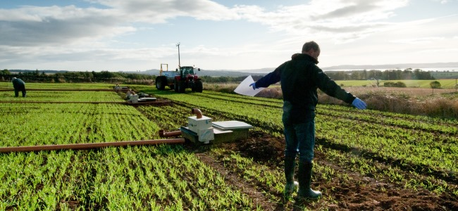 Scottish research helps tackle global agricultural challenges