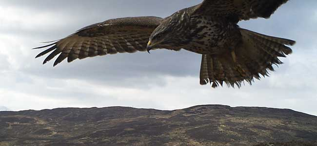Discover Scotland's wildlife caught on camera